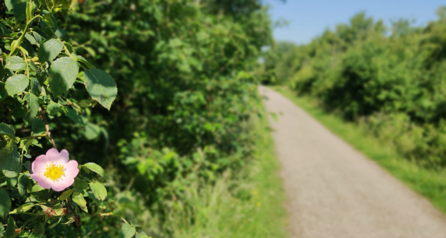 Five Pits Trail- Cycling in Chesterfield